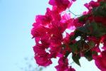 Blume lila von rechts | Blauer Himmel links